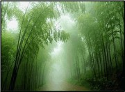 竹林风景油画 大芬村油画 20